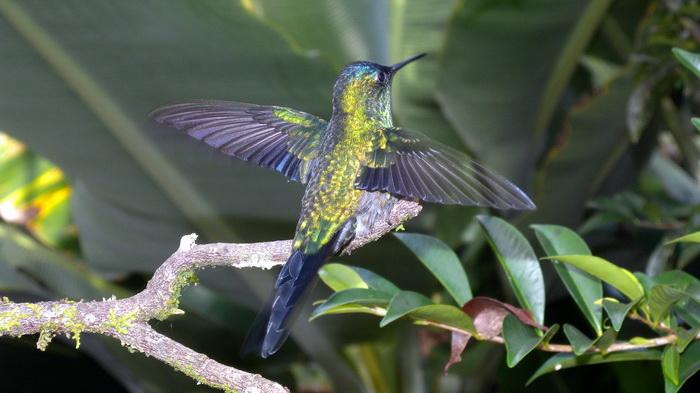 Colibrì (foto Curletti)