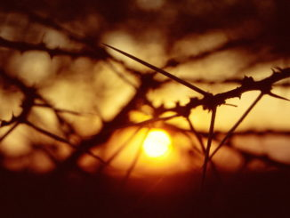 001026 102 Makima sunrise